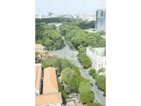 Sài Gòn - không gian xanh!